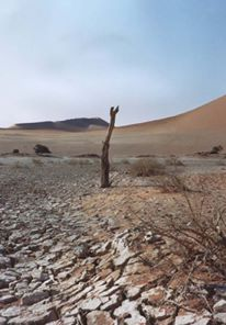 Dry river bed at Sossusvlei, Namibia