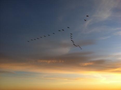 Vögel folgen der Fähre